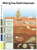 Montessori Clock of Eras fossil comparison chart FREE