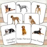 Montessori Dog Breeds Toob 3 Part Cards