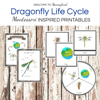 Montessori Dragonfly Life Cycle