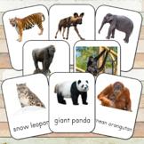 Montessori Endangered Land Species Toob  3 Part Cards