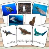 Montessori Endangered Marine Species Toob  3 Part Cards