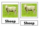 Montessori Farm Sheep Nomenclature Cards