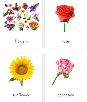 Montessori Flower 3 Part Cards