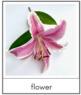 Montessori Flower Anatomy 3-Part Cards