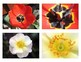 Montessori Flower Matching Cards-Part to Whole-Science, Botany, Biology, 3-6 yrs
