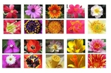 Montessori Flower Matching Cards-Part to Whole-Science, Bo