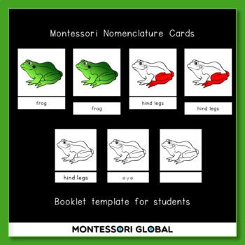 Montessori - Frog 3 Part Nomenclature Cards & Interactive Boom Cards
