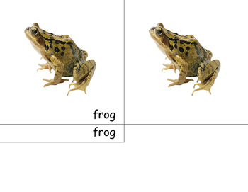 Montessori Frog- 3 part cards