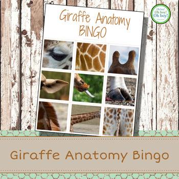 Montessori Giraffe Anatomy Bingo
