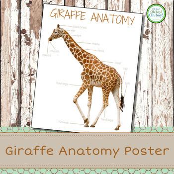 Montessori Giraffe Anatomy Poster
