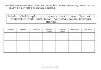 Montessori Human Body test for assessment