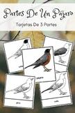 Montessori In Spanish Parts Of A Bird 3 Part Cards