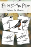 Montessori In Spanish Parts Of A Bird 3 Part Cards