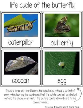 Montessori - Insects