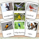 Montessori Inspired Backyard Birds 3 Part Cards