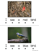 Color Words Emergent Reader Book - My Book About Birds