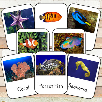 Montessori Inspired Coral Reef 3 Part Cards