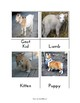 Montessori Inspired Farm Animal Babies 3 Part Cards