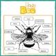 20 Page Honey Bee Preschool Bundle