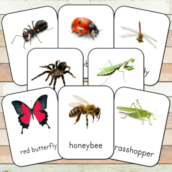 Montessori Inspired Insects Toob 3 Part Cards