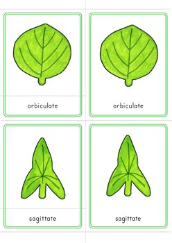 Montessori Inspired Leaf Shapes