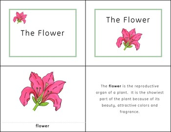 Montessori Inspired Parts of a Flower