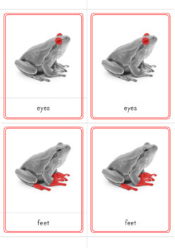 Montessori Parts of a Frog Learning Pack