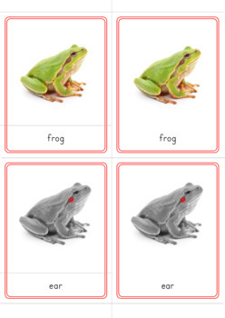 Parts of a Frog Montessori 3 Part Cards and Definitions