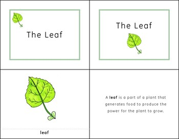 Montessori Inspired Parts of a Leaf