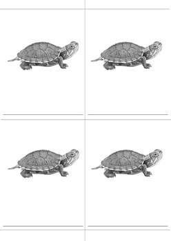 Parts of a Turtle Montessori 3 Part Cards and Definitions