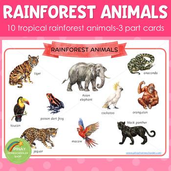 Montessori Inspired Rainforest Animals 3 Part Cards