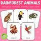 Rainforest Jungle Animals Montessori 3 Part Cards