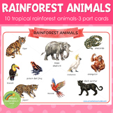 Montessori Inspired Rainforest Animals 3 Part Cards