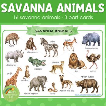 Montessori Inspired Savanna Animals 3 Part Cards