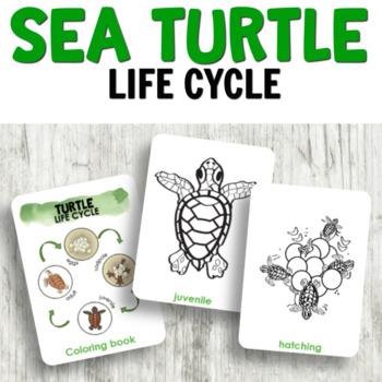 Montessori Inspired Sea Turtle Life Cycle