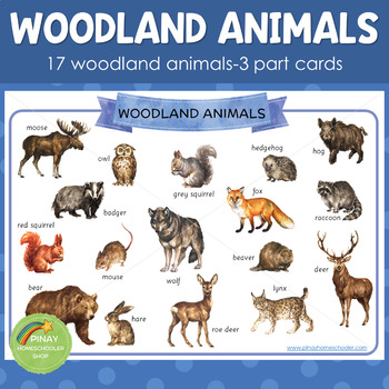 Montessori Inspired Woodland Animals 3 Part Cards