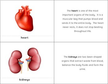Montessori Internal Organs of the Human Body 3 Part Cards