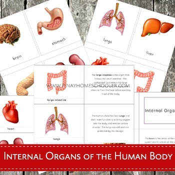 Internal Organs of the Human Body Nomenclature and Description Cards
