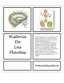 Montessori Introducción al Reino de las Plantas