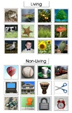 Montessori LIVING and NON-LIVING Category Sorting Cards, Science, Vocabulary