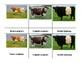 Montessori 3 part Language Cards - Cows