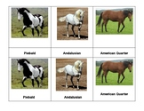 Montessori 3 part  Language Cards - Horses
