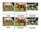 Montessori 3 part  Language Cards - Horses