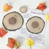 Montessori Layers of the [Oak] Tree Learning Pack Unit