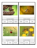 Montessori Measurement Cards