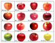 Apples: Super Bundle