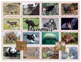 Montessorilove Mammals Super Bundle