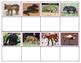 Animals of South America- Bundle