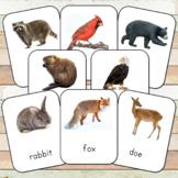 Montessori Nature Toobs 3 Part Cards