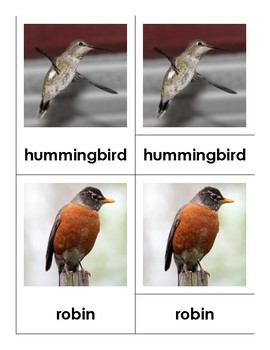 Montessori Nomenclature 3-Part Cards - BIRDS - Vocabulary, Science, Zoology